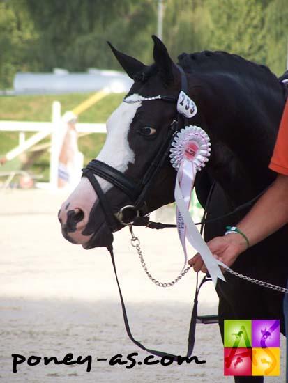 Domino, vice-champion par équipe et 4e de la consolante, photo Pauline Bernuchon