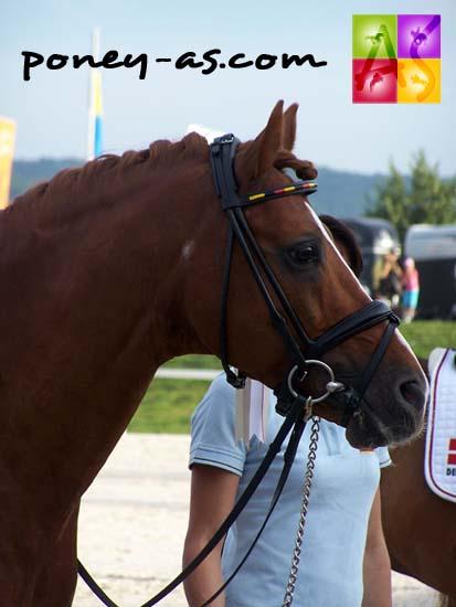 L'étalon allemand Going East, médaillé d'or par équipe, photo Pauline Bernuchon