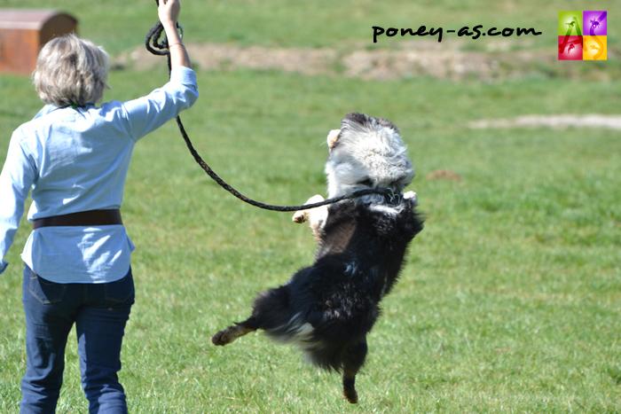 Cavaliers et poneys avaient la forme sur le cross du Grand Prix de Pompadour se livrant à de bien jolies prestations (et les petits chiens aussi...) - ph. Pauline Bernuchon