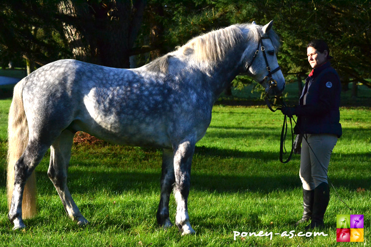 Caoranbeg Champ (Co, 6 ans, Moorland Snowy River x Commanding Hero) - ph. Pauline Bernuchon