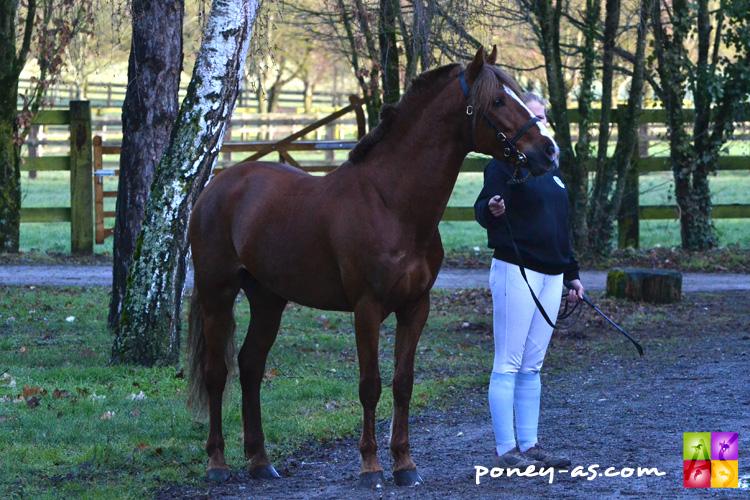 Emeryt Misbour Co, 5 ans, Imperial du Blin x Banagher Magee) - ph. Pauline Bernuchon