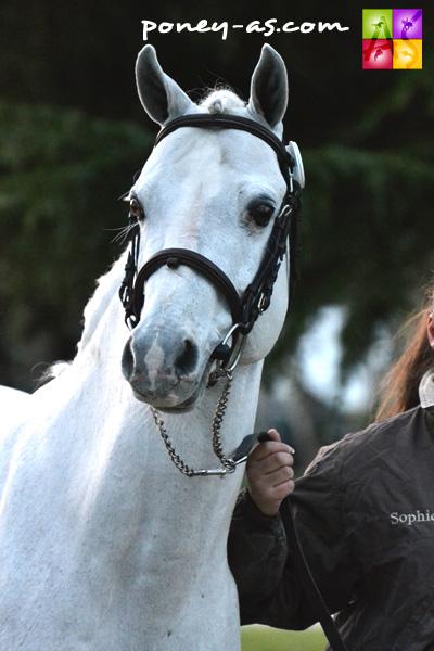 Moka du Vignault (Wb, 15 ans, Oscar des Chouans x Twyford Signal) - ph. Pauline Bernuchon