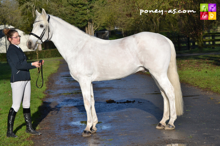 Oxbow du Loir (Co, 13 ans, Canal Misty Fionn x Abbeyleix Apollo) - ph. Pauline Bernuchon