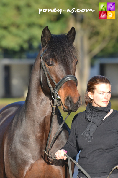 Sean de l'Aulne (Co, 9 ans, Macky x Dream of Aulne) - ph. Pauline Bernuchon