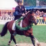 Machno Carwyn est toujours le meilleur étalon poney d'Europe ! - ph. coll. privée