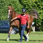 eventing aarhus pony