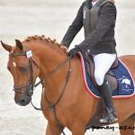 Bacchus du Hersent étalon poney