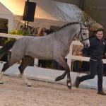 Dagster du Roquet étalon poney