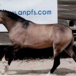 france dressage poney