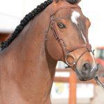 Ugo des Clas étalon poney