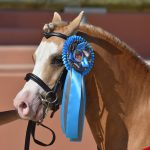 FPPCF 3 ans sport sologn pony poney as