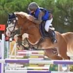 étalon poney as - sologn'pony