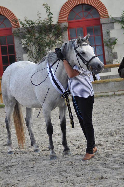 Régional connemara bretagne poney as