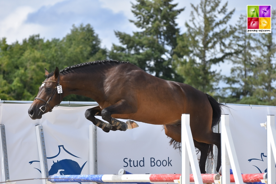 Sologn'Pony National Pfs Poney As