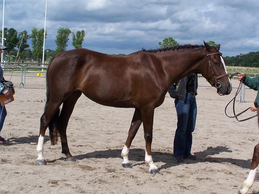 Pin Up de Blonde, championne des poulinières au Sologn'Pony 2006 - ph. Pauline Bernuchon