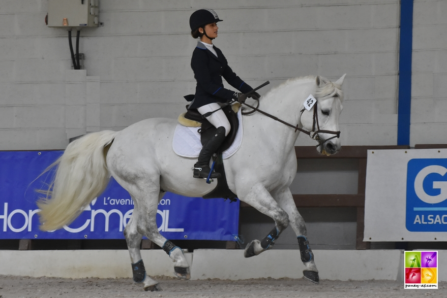 Caval'Est 2018 étalon poney