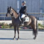 Poney as étalon sport 2018