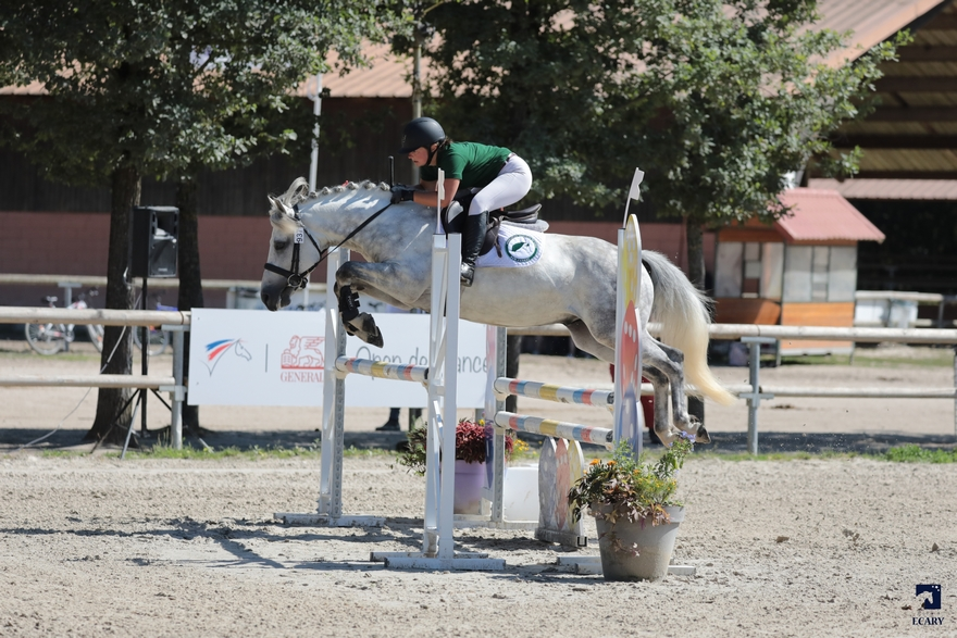 National New Forest 2018 Sologn'Pony