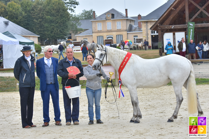 La championne Junior Connemara 2018 : Fenixe de Malsaire - ph. Poney As