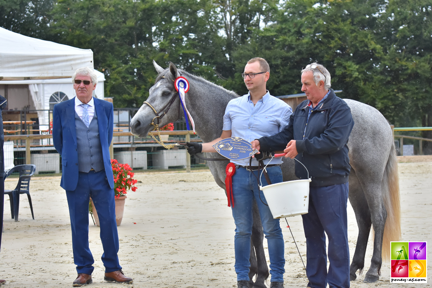 Réserve champion Junior 2018 : Guyane des Noyers - ph. Poney As