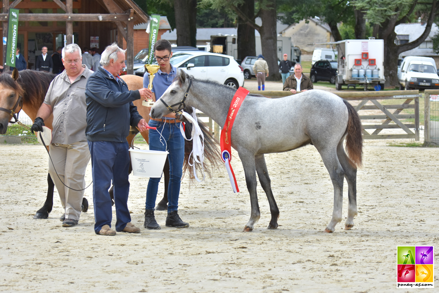 Champion Foal 2018 : Inish Boy de Gally - ph. Poney As