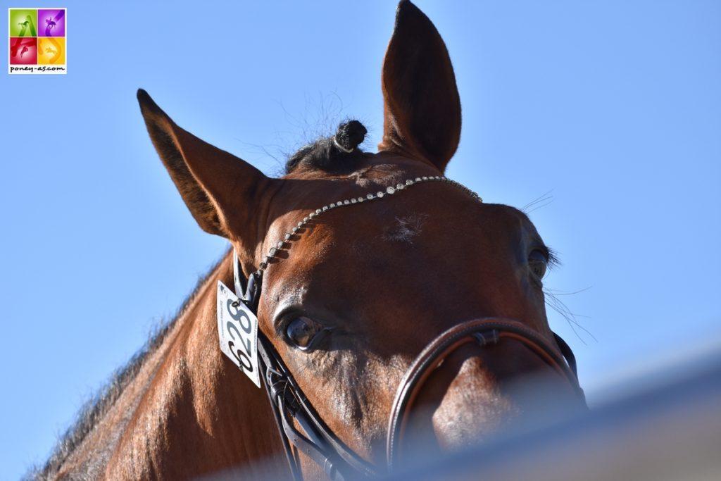 national Pfs 2018 sologn'pony