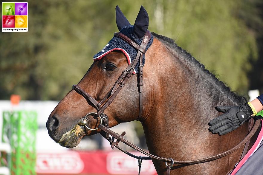 Ken van Orchid, victorieux de la 1,25 m ce matin sous la selle d'Ilona Mezzadri - ph. Poney As