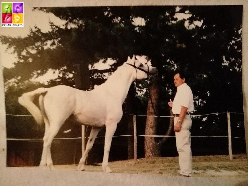Apollon et Gilles au National Connemara de 1999 - ph. Poney As