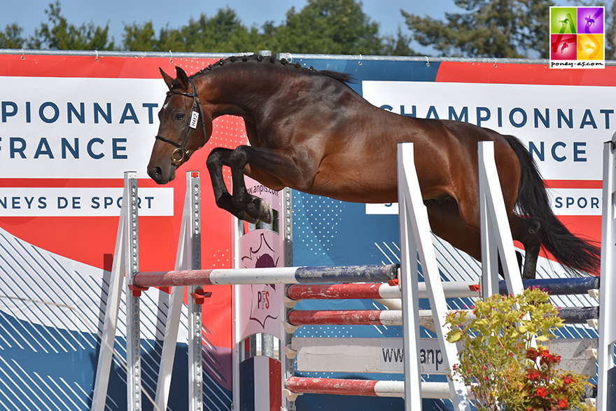 Goethe d'Uriat, champion de France des 3 ans Sport FPPCF - ph. Poney As