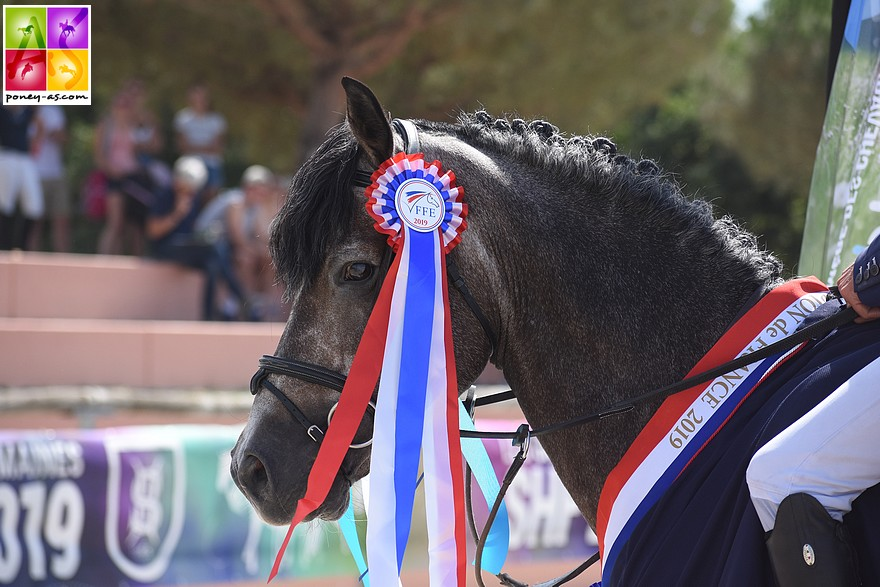Crazy Horse Flayelles, champion des 7 ans de l'édition 2019 - ph. Poney As
