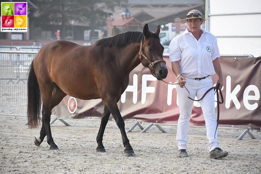 Bysance du Braou remporte la catégorie des poulinières non suitées - ph. Poney As