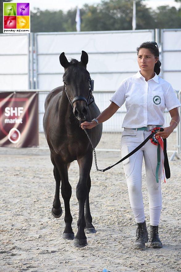 Itsybitsy de Gascogne, vainqueur de la classe des mâles d'1 an - ph. Poney As
