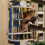 Les premières finales de Hunter dédiées aux jeunes poneys se disputeront cette année, lors de la Grande Semaine de Fontainebleau – ph. coll. privée