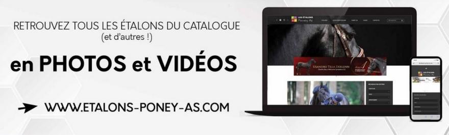 https://www.etalons-poney-as.com : la plate-forme web dédiée aux étalons