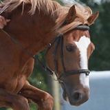 poney par MAchno Carwyn