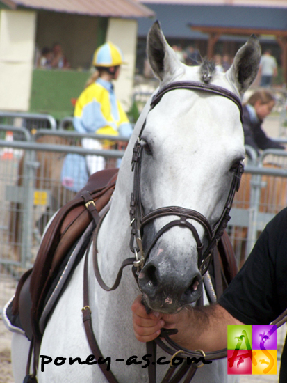 Jimmerdor de Florys, photo Pauline Bernuchon