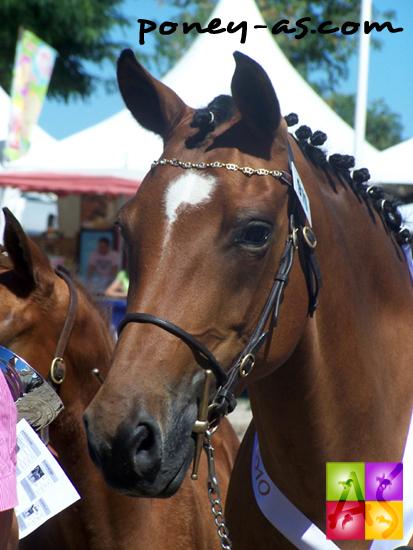 La championne des poulinières Mado des Charmes, photo Pauline Bernuchon