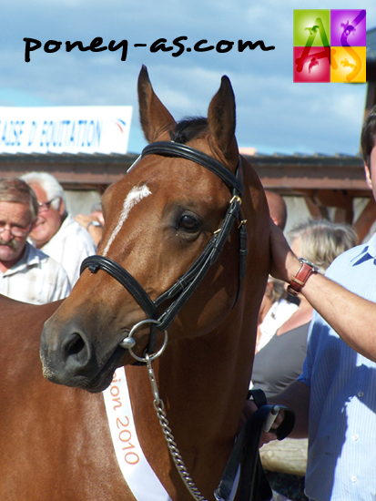 Le champion des 2 ans mâles Pfs Udaipur Nordmann, photo Pauline Bernuchon