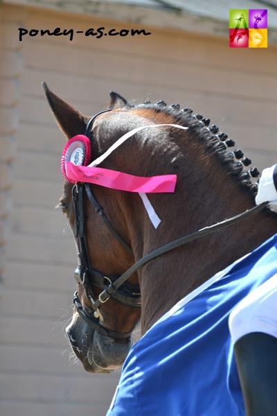 Hesselteich's Desert Rose, championne de France des 6 ans dressage - ph. Pauline Bernuchon