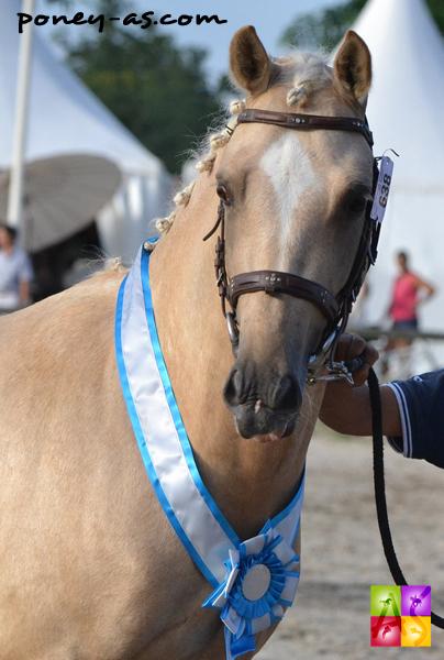 Champion des 2 ans, Bacara de Grossetiere (par  Salam du Roc et Prune de Grossetiere par Oscar des Chouans, Wb) - ph. Pauline Bernuchon