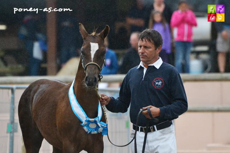 Champion des foals, Duc du Bosquet (par Veeping de Beaufort et Naomi du Bosquet) - ph. Pauline Bernuchon