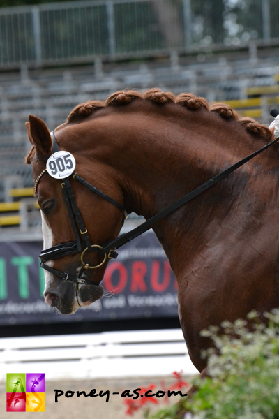 10e, Tackmann's Donut (Denver x FS Golden Highlight) - ph. Pauline Bernuchon