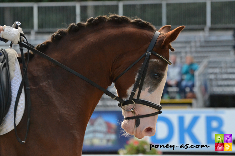 10e ex, Tay Mahal (Top Anthony II x Nuts) - ph. Pauline Bernuchon