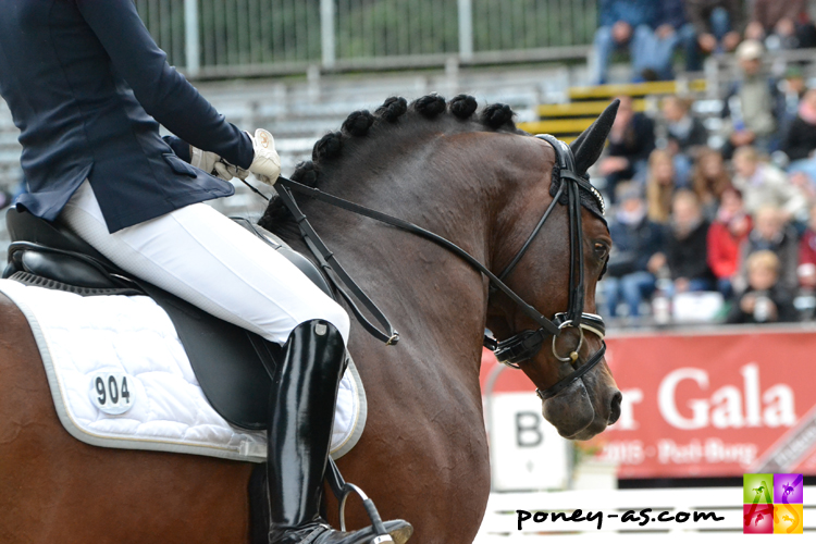 9e, Tackmann's Don Alonso (Der Feine Lord AT x Black Boy) - ph. Pauline Bernuchon