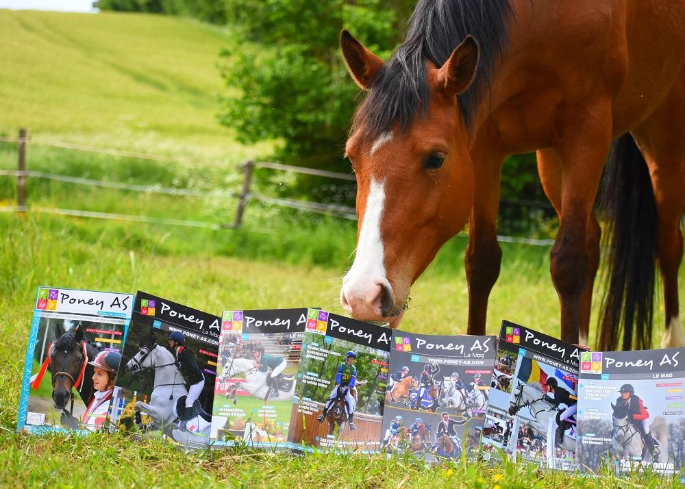 Sport et élevage poney