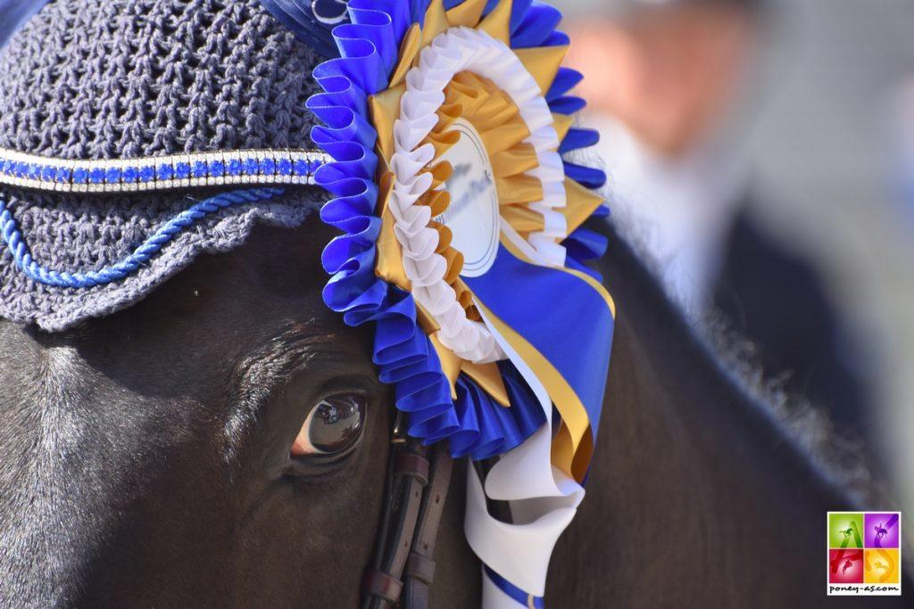 Sport poney, Poney As