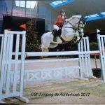 Rexter d'Or pony stallion