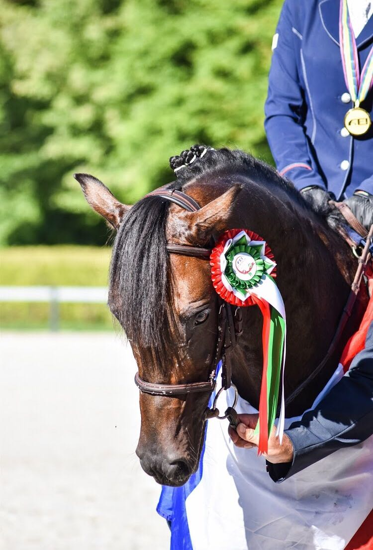 O Ma Doué Kersidal, champion d'Europe sous la selle de Lisa Gualtieri est indicé 158 - ph. coll. Gualtieri