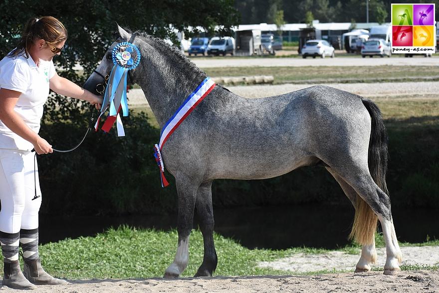 Falan's Dornoa, champion des mâle de 3 ans poneys de sport - ph. Poney As