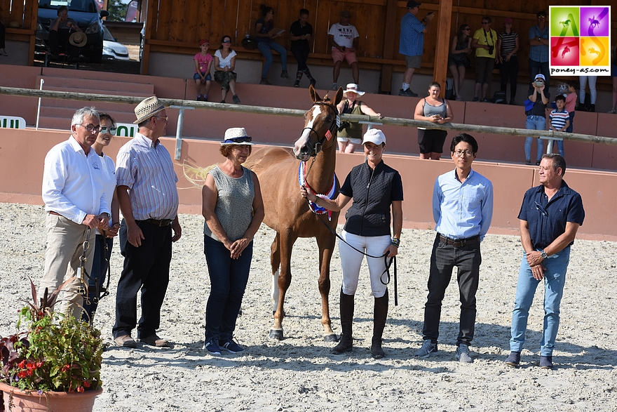 Fenix du Ruisseau, champion des hongres de 3 ans poneys de sport et champion Suprême - ph. Poney As